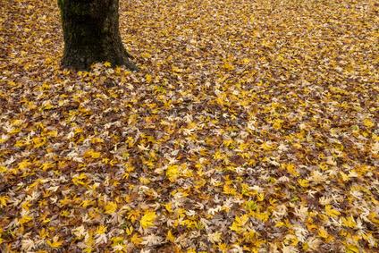 Tappeto di foglie autunnale